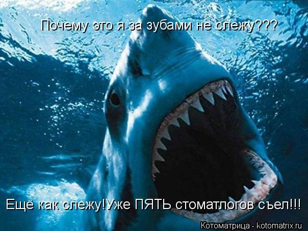 Котоматрица: Почему это я за зубами не слежу??? Ещё как слежу!Уже ПЯТЬ стоматлогов съел!!!