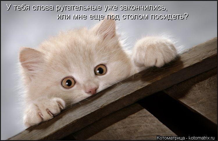 Котоматрица: У тебя слова ругательные уже закончились, или мне еще под столом посидеть?