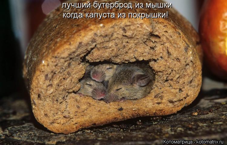 Котоматрица: лучший бутерброд из мышки когда капуста из покрышки!