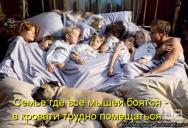 Котоматрица: Семье где все мышей боятся -  в кровати трудно помещаться...