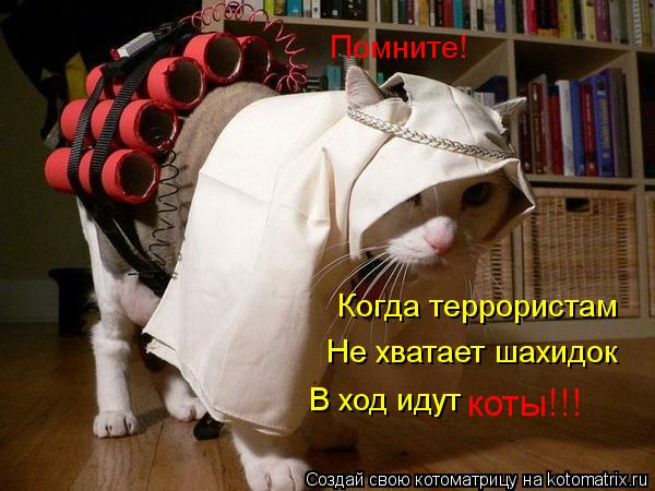 Котоматрица: Помните! Когда террористам Не хватает шахидок В ход идут коты!!!