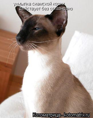 Котоматрица: ухмылка сиамской кошки действует без отказнозно
