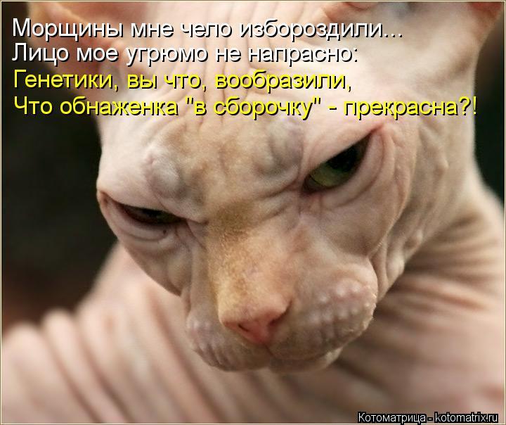 """Котоматрица: Морщины мне чело избороздили... Генетики, вы что, вообразили, Что обнаженка """"в сборочку"""" - прекрасна?! Лицо мое угрюмо не напрасно:"""
