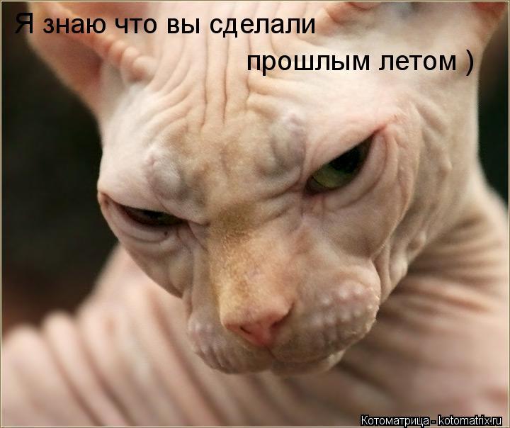 Котоматрица: Я знаю что вы сделали  прошлым летом )