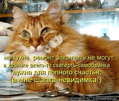 Котоматрица: на кухне  ремонт закончить не могут... а хозяйке всего-то скатерть-самобранка нужна для полного счастья, (а мне шапка-невидимка!)