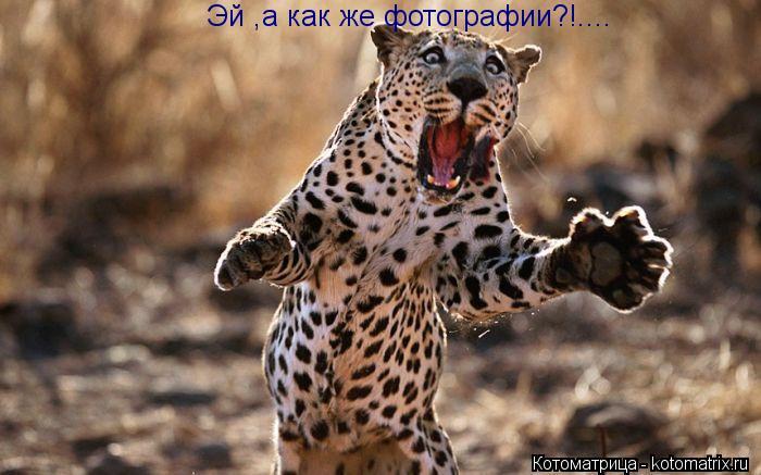 Котоматрица: Эй ,а как же фотографии?!....