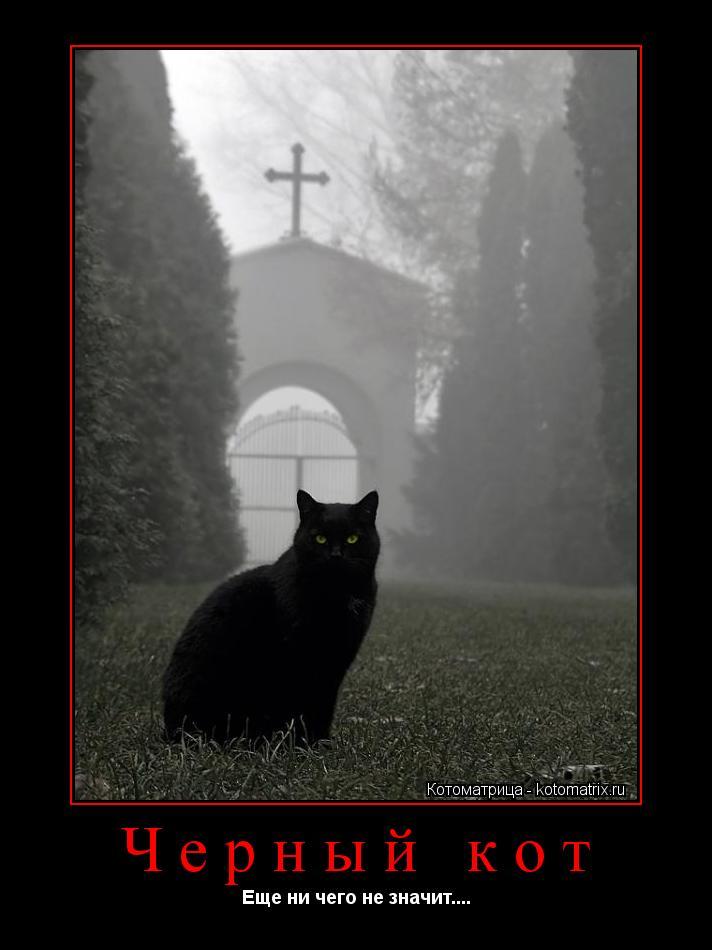 Котоматрица: Черный кот Еще ни чего не значит....