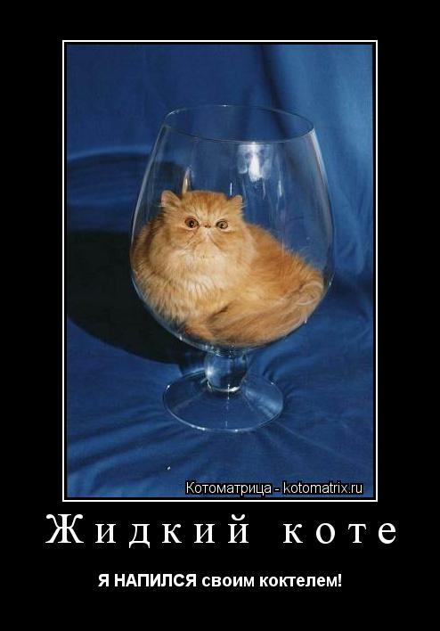 Котоматрица: Жидкий коте Я НАПИЛСЯ своим коктелем!