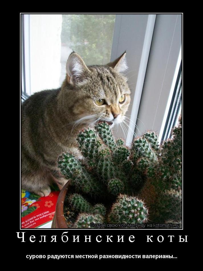 Котоматрица: Челябинские коты сурово радуются местной разновидности валерианы...