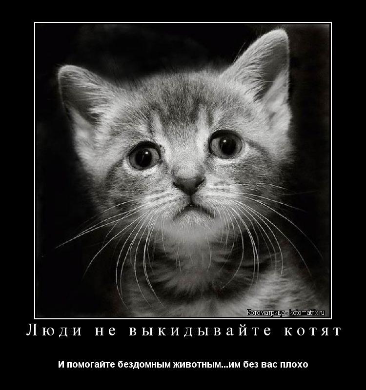 Котоматрица: Люди не выкидывайте котят И помогайте бездомным животным...им без вас плохо