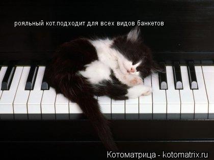 Котоматрица: рояльный кот.подходит для всех видов банкетов