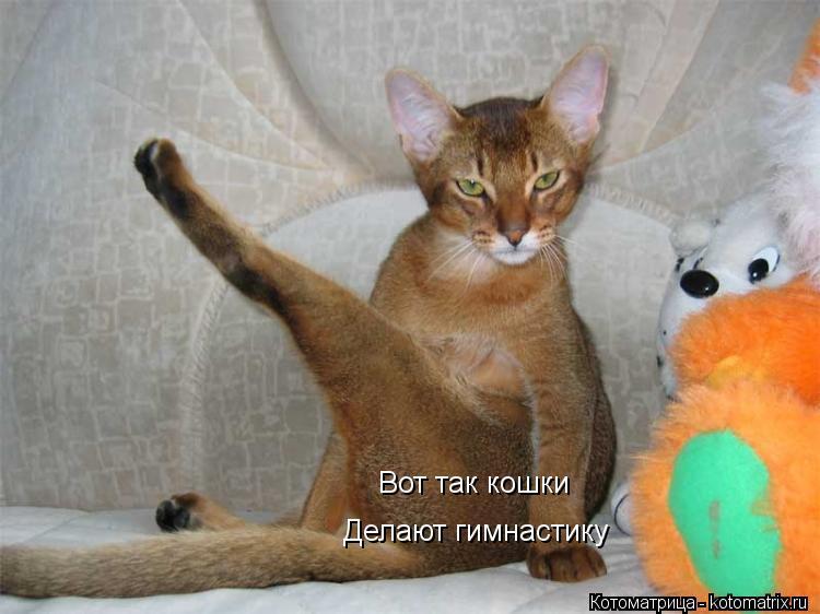 Котоматрица: Вот так кошки Делают гимнастику