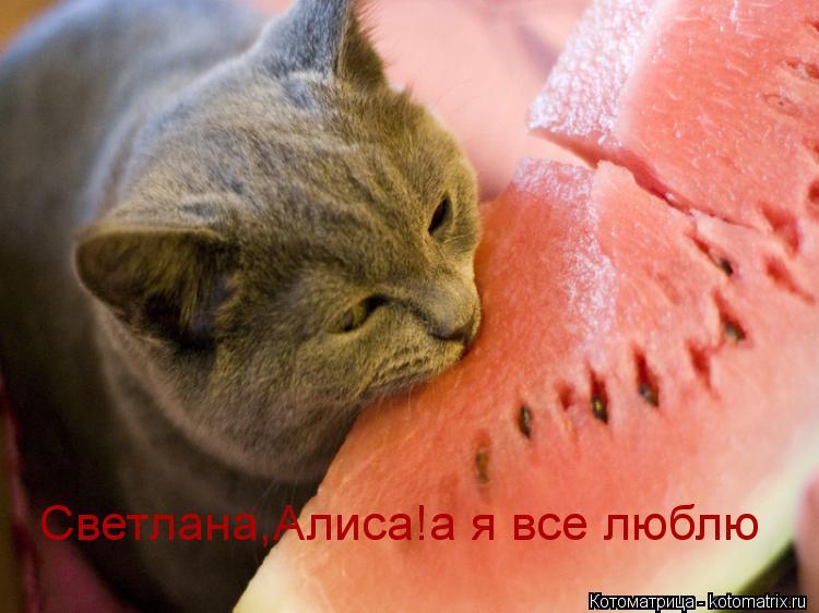 Котоматрица: Светлана,Алиса!а я все люблю