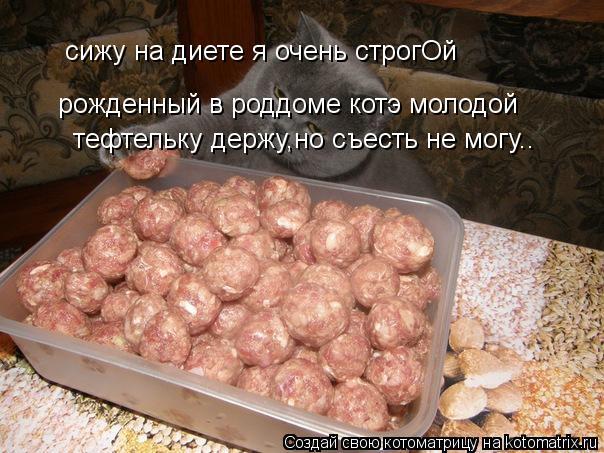 Котоматрица: сижу на диете я очень строгОй рожденный в роддоме котэ молодой тефтельку держу,но съесть не могу..