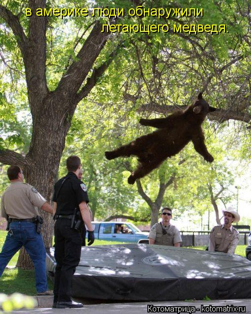 Котоматрица: в америке люди обнаружили летающего медведя.