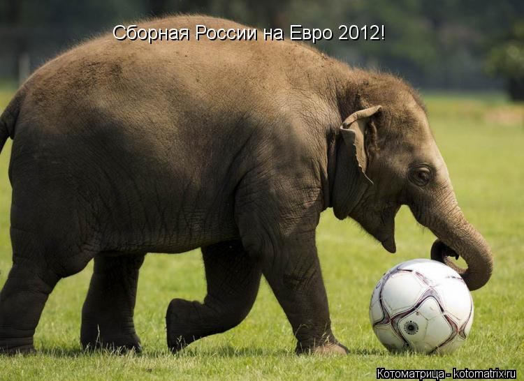 Котоматрица: Сборная России на Евро 2012!