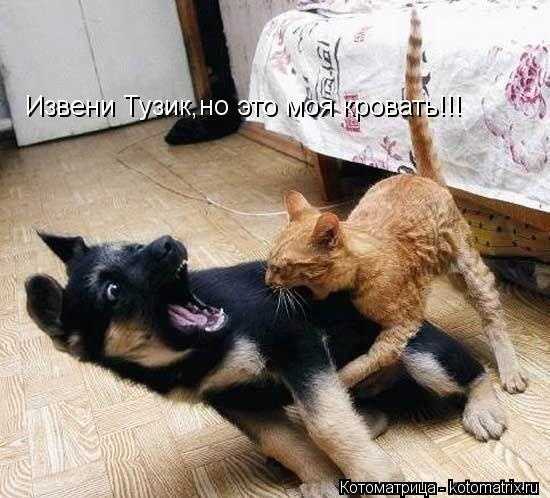 Котоматрица: Извени Тузик,но это моя кровать!!!