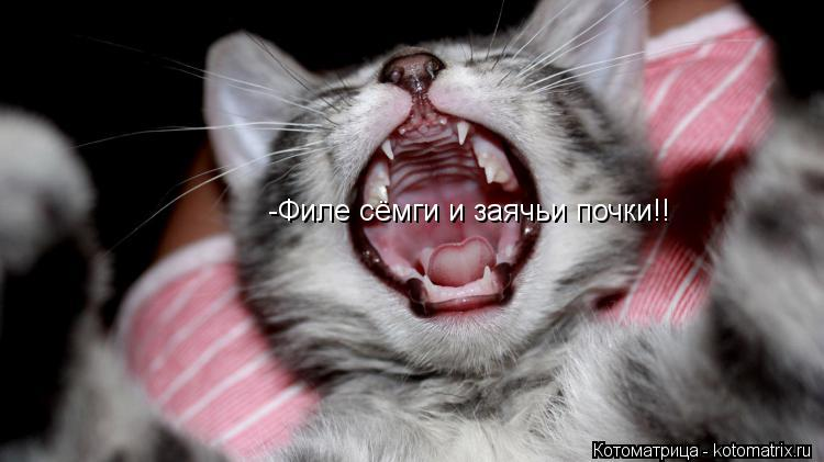 Котоматрица: -Филе сёмги и заячьи почки!!