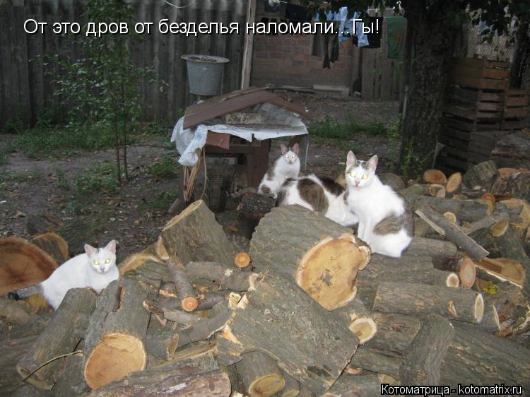 Котоматрица: От это дров от безделья наломали...Гы!