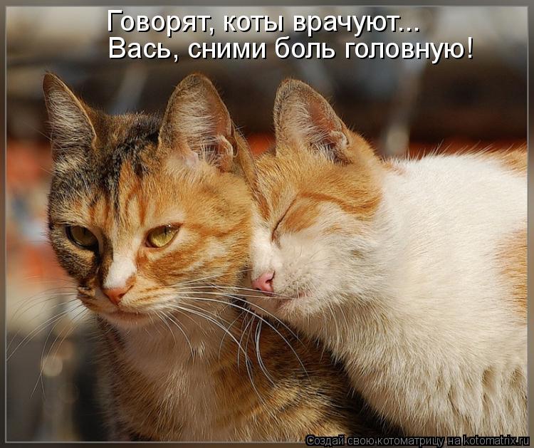 Котоматрица: Говорят, коты врачуют... Вась, сними боль головную!