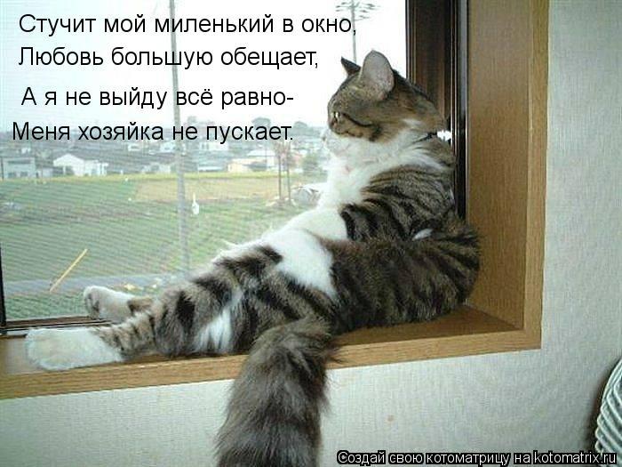 Котоматрица: Стучит мой миленький в окно, Любовь большую обещает, А я не выйду всё равно- Меня хозяйка не пускает.