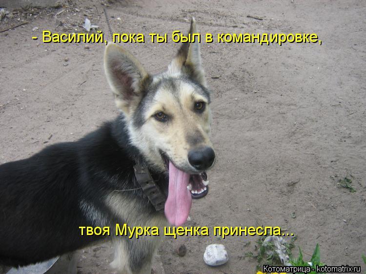 Котоматрица: - Василий, пока ты был в командировке, твоя Мурка щенка принесла...