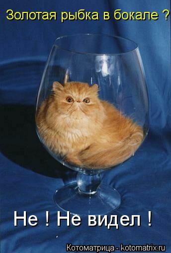 Котоматрица: Золотая рыбка в бокале ? Не ! Не видел !