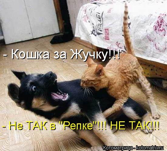 """Котоматрица: - Кошка за Жучку!!! - Не ТАК в """"Репке""""!!! НЕ ТАК!!!"""