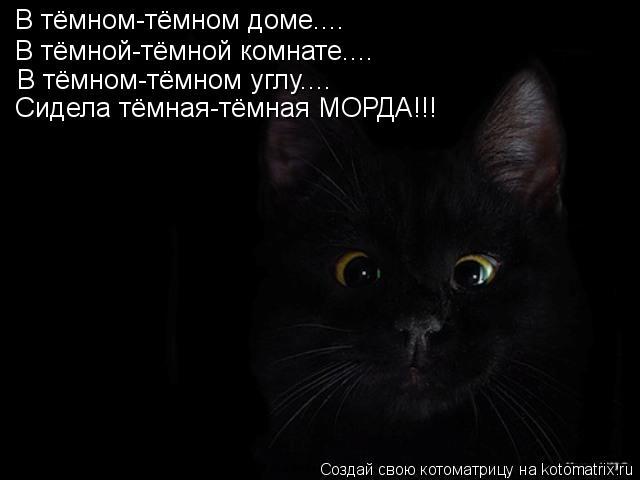 Котоматрица: В тёмном-тёмном доме.... В тёмной-тёмной комнате.... В тёмном-тёмном углу.... Сидела тёмная-тёмная МОРДА!!!
