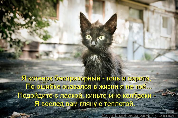 Котоматрица: Я котенок беспризорный - голь и сирота, По ошибке оказался в жизни я не той... Подойдите с лаской, киньте мне колбаски - Я вослед вам гляну с те