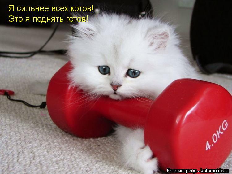 Котоматрица: Я сильнее всех котов! Это я поднять готов!