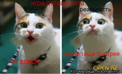 Котоматрица: игра дотащи кота мысли не дамся реальность давай тащи быстрей