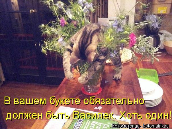 Котоматрица: В вашем букете обязательно  должен быть Василек. Хоть один!