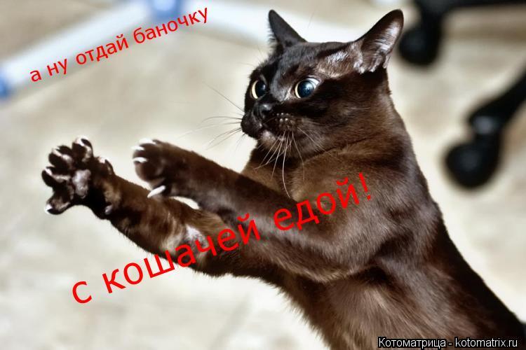Котоматрица: а ну отдай баночку  с кошачей едой!