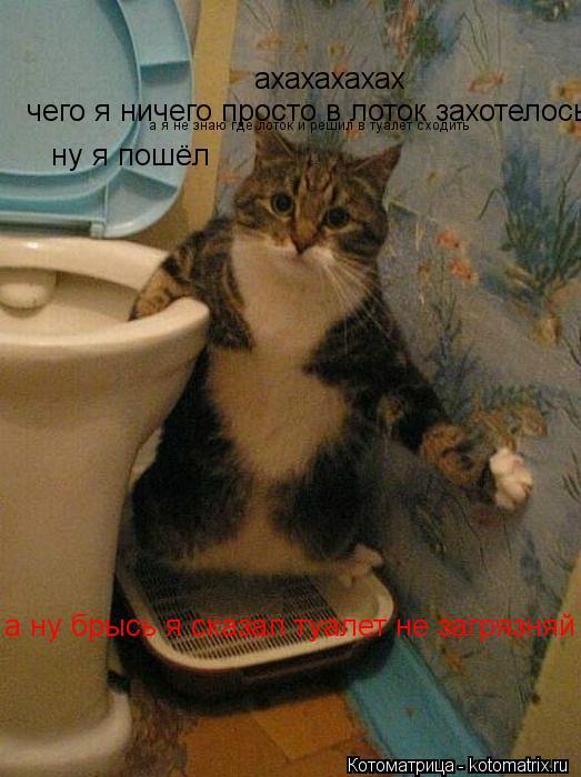Котоматрица: ахахахахах чего я ничего просто в лоток захотелось а я не знаю где лоток и решил в туалет сходить а ну брысь я сказал туалет не загрязняй ну