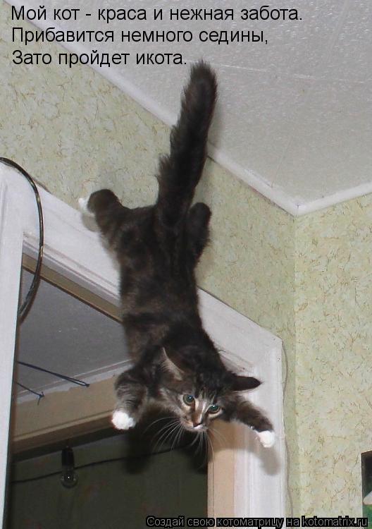 Котоматрица: Мой кот - краса и нежная забота. Прибавится немного седины, Зато пройдет икота.