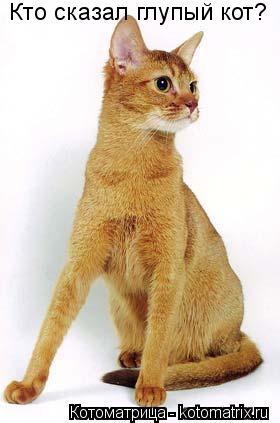 Котоматрица: Кто сказал глупый кот?