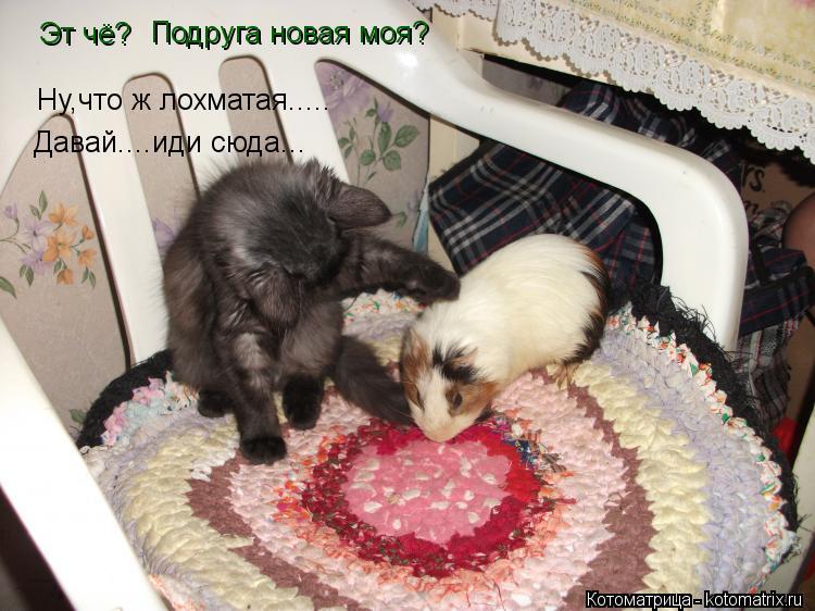 Котоматрица: Эт чё? Подруга новая моя? Ну,что ж лохматая..... Давай....иди сюда...
