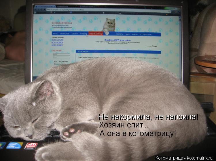 Котоматрица: Не накормила, не напоила! Хозяин спит... А она в котоматрицу!