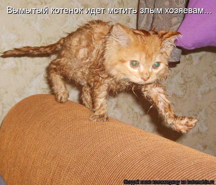 Котоматрица: Вымытый котенок идет мстить злым хозяевам...