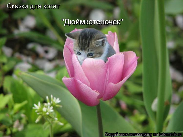 "Котоматрица: Сказки для котят ""Дюймкотеночек"""