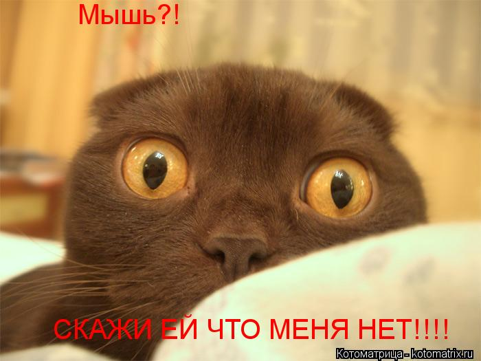 Котоматрица: Мышь?!  СКАЖИ ЕЙ ЧТО МЕНЯ НЕТ!!!!