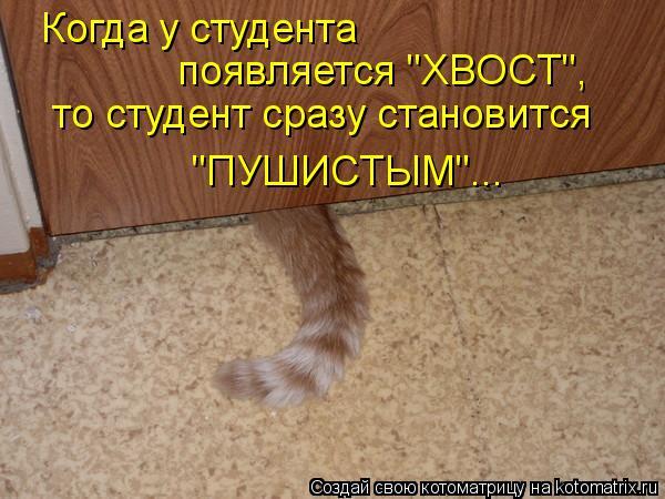 """Котоматрица: Когда у студента появляется """"ХВОСТ"""", то студент сразу становится """"ПУШИСТЫМ""""..."""