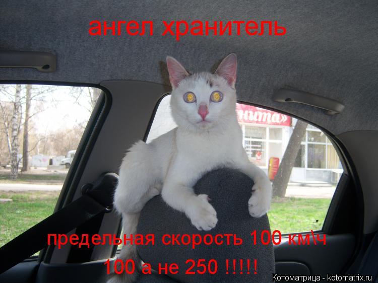 Котоматрица: ангел хранитель предельная скорость 100 км\ч 100 а не 250 !!!!!