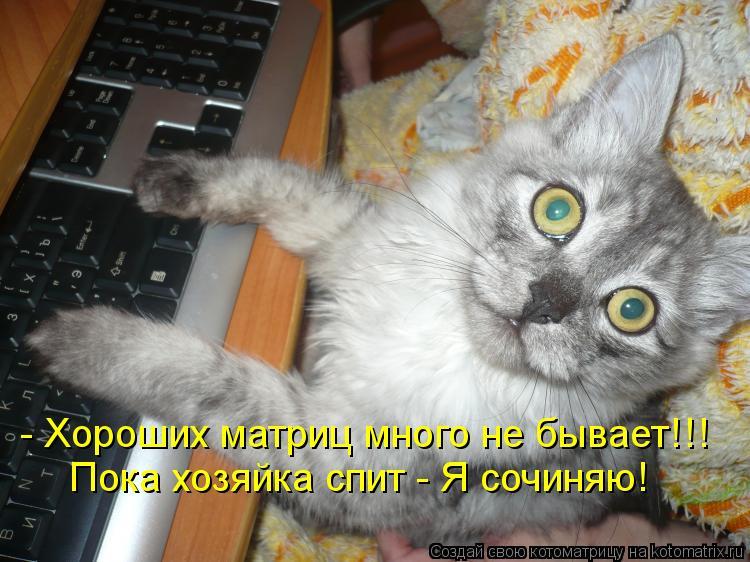 Котоматрица: - Хороших матриц много не бывает!!! Пока хозяйка спит - Я сочиняю!