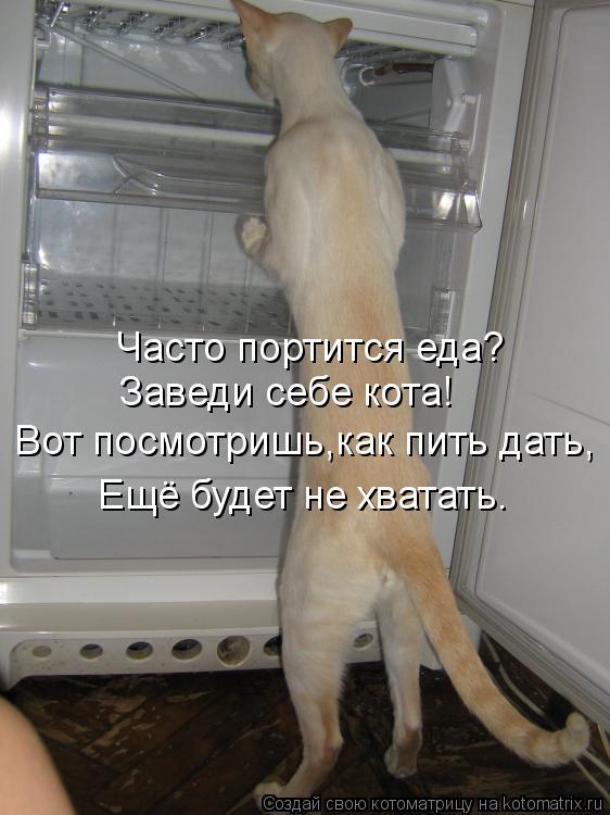 Котоматрица: Часто портится еда? Заведи себе кота! Вот посмотришь,как пить дать, Ещё будет не хватать.