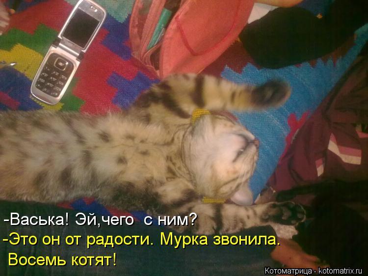 Котоматрица: -Васька! Эй,чего  с ним? -Это он от радости. Мурка звонила. Восемь котят!