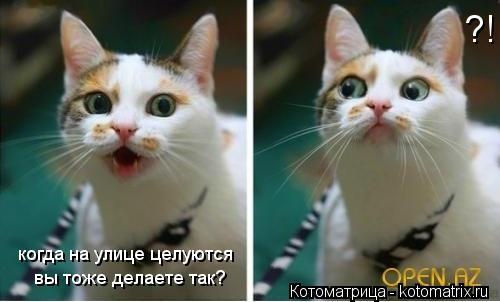Котоматрица: когда на улице целуются  вы тоже делаете так? ?!