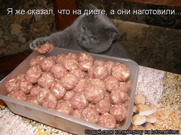 Котоматрица: Я же сказал, что на диете, а они наготовили...