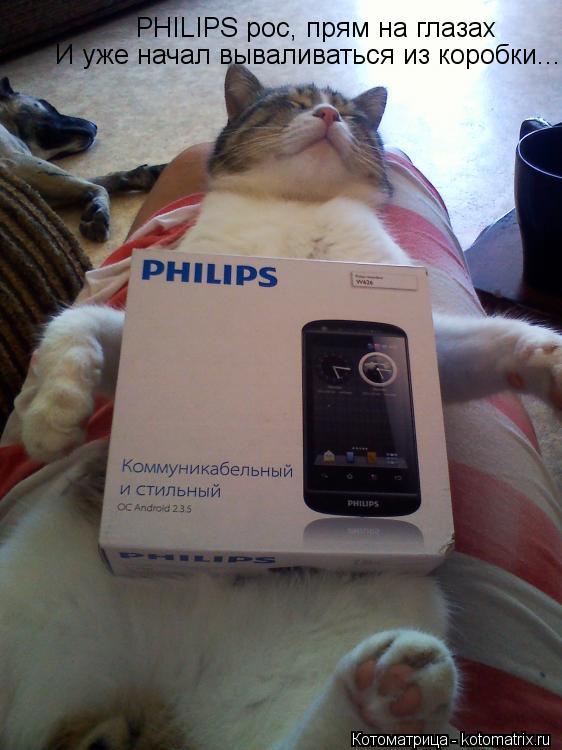Котоматрица: PHILIPS рос, прям на глазах  И уже начал вываливаться из коробки...